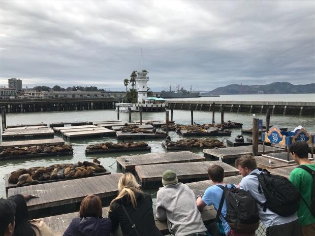 sea lions 1